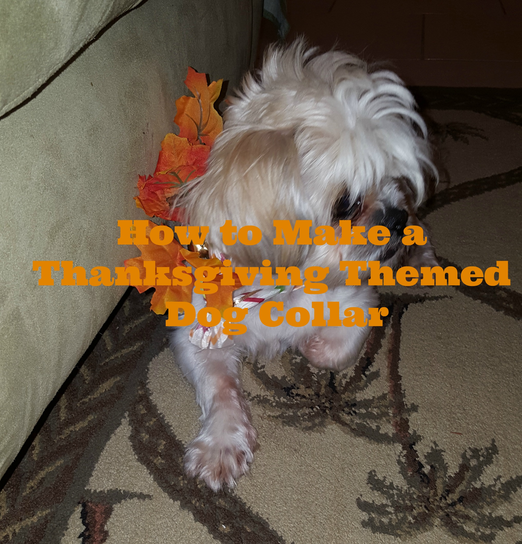 How to Make a Thanksgiving Themed Dog Collar